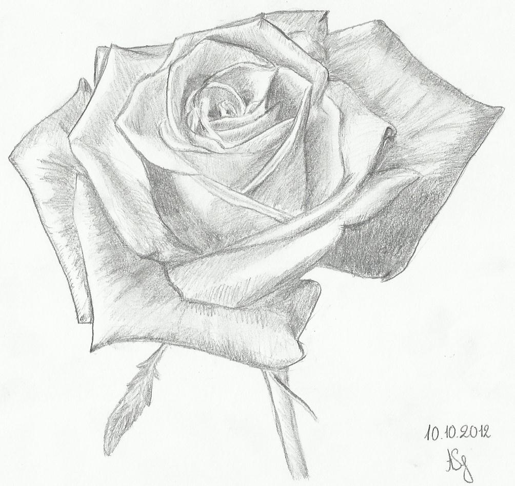 Dessins allasavidy - Coloriage d une rose ...